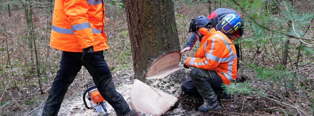 european treeworker etw